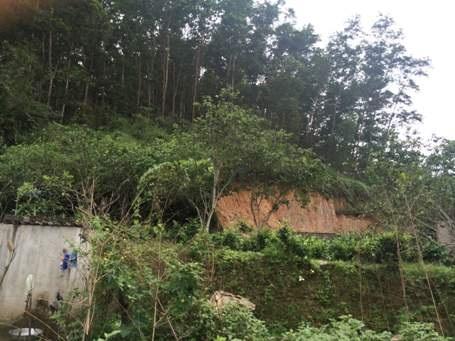 Khu vực đất rừng xảy ra tranh chấp giữa hộ ông Hiến và hộ ông Thìn