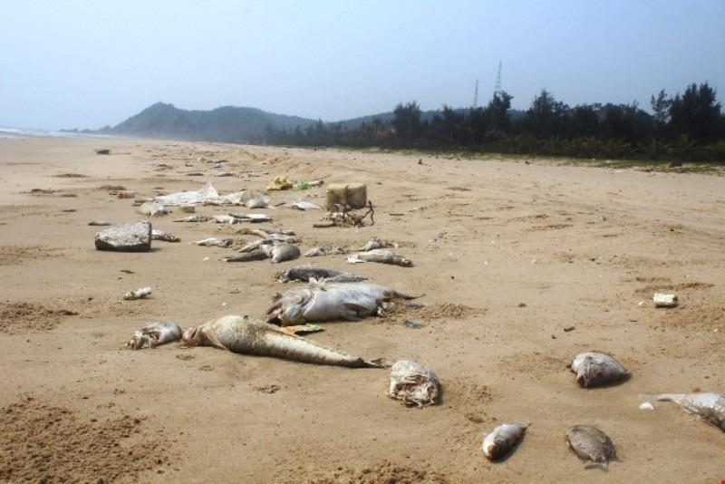 Dù sự cố thảm họa môi trường biển xảy ra đã lâu và Chính phủ cũng yêu cầu xử lý nghiêm những cá nhân, tổ chức liên quan thế những tỉnh Hà Tĩnh mới chỉ có một cá nhân tự nhận hình thức kỷ luật nhưng vẫn còn quá nhẹ
