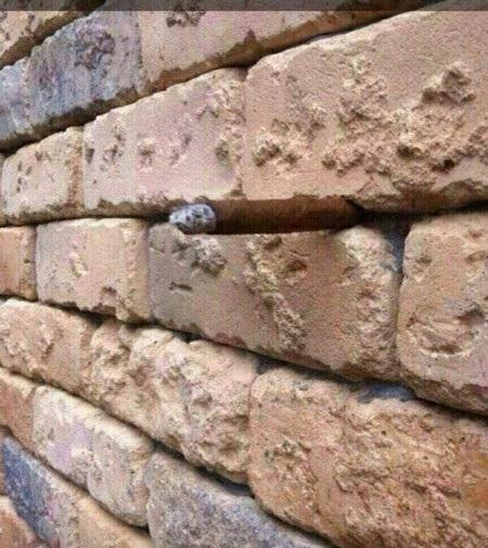 """Tấm ảnh bức tường gạch """"gây sốt"""" trên mạng xã hội vì bí ẩn chứa bên trong tấm ảnh"""