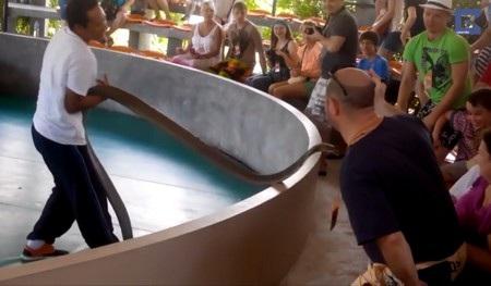 Nghệ sĩ biểu diễn rắn đã kịp thời kéo con rắn độc lại trước khi nó thực hiện cú mổ chết người nhằm vào đám đông khán giả
