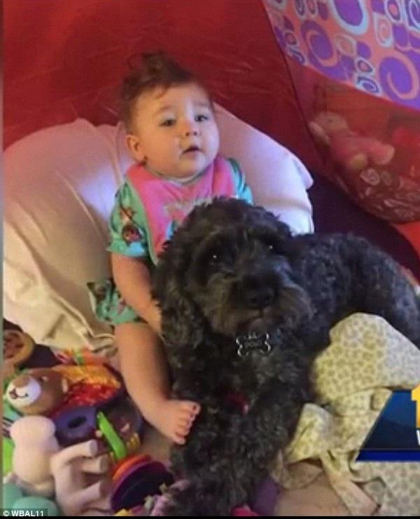 Hình ảnh chú chó Polo và cô bé Viviana
