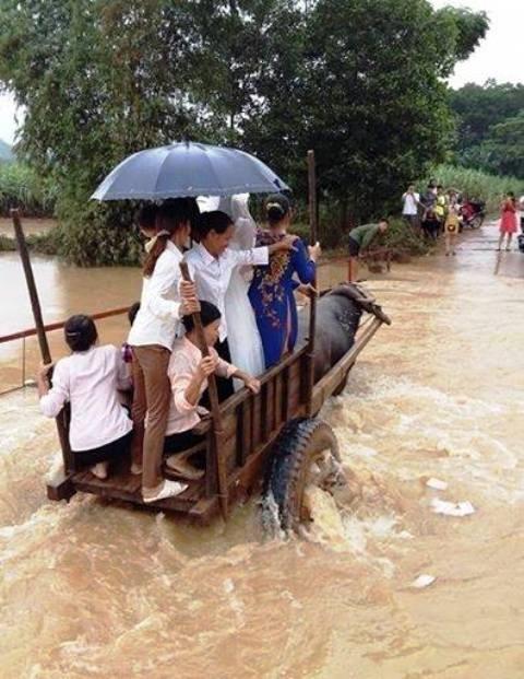 Không chỉ cô dâu, chú rể mà cả những người thân trong gia đình cũng phải ngồi xe trâu vì nước lũ ngập quá sâu