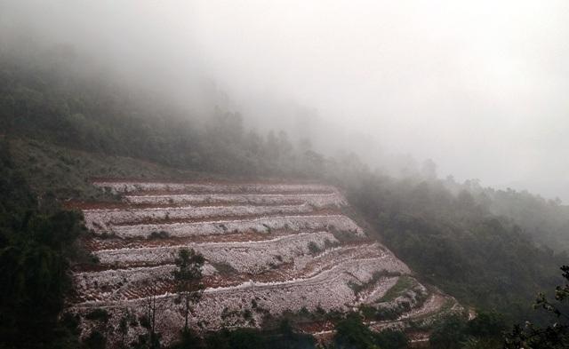 Ruộng bậc thang trắng tuyết