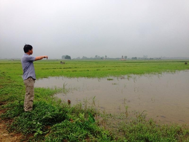 Cánh đồng mấu lớn ở xã Gia Hòa bị bỏ hoang vì nhiều hộ dân không nhận ruộng do xã chia thiếu đất