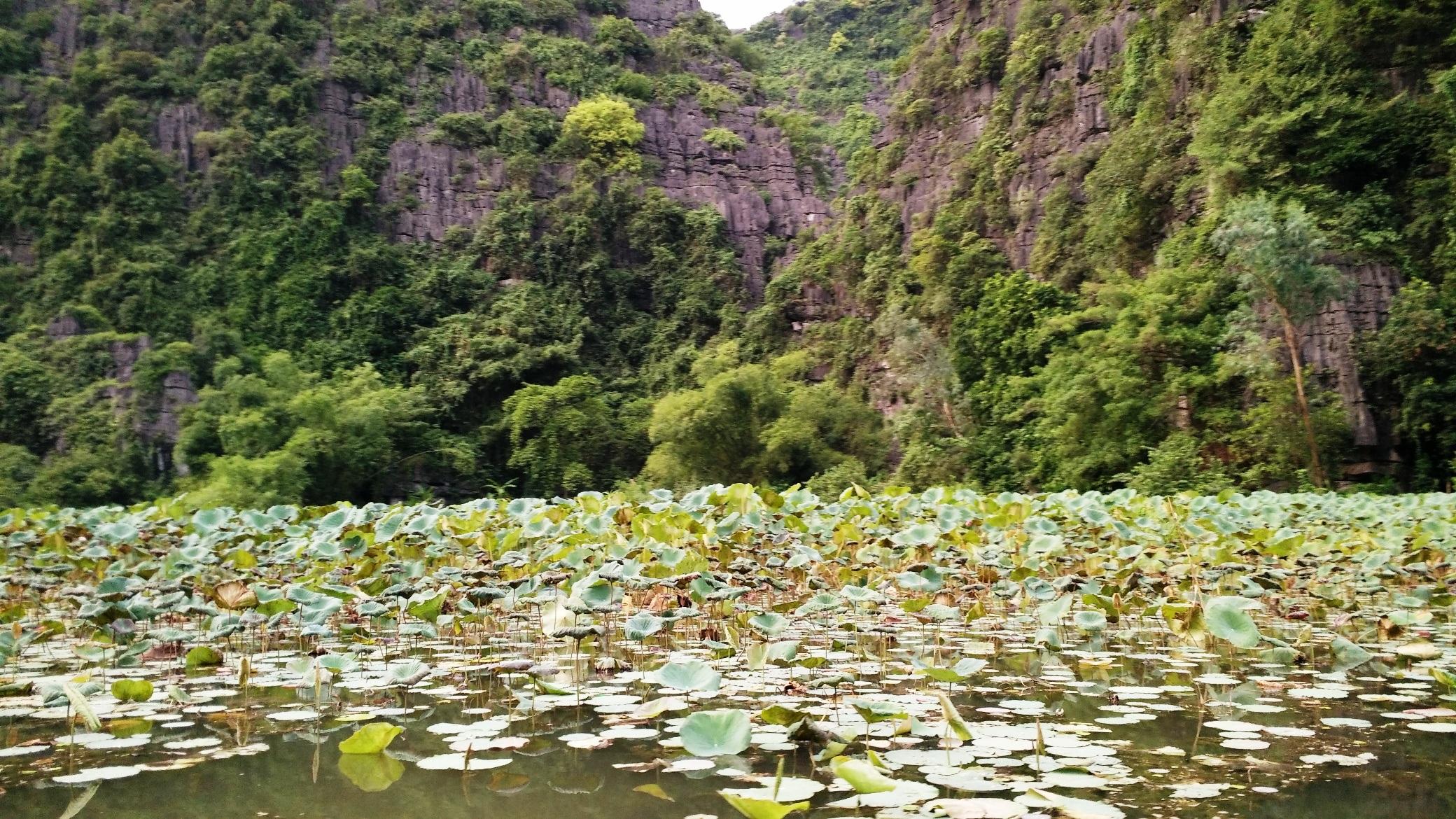 Dòng sông trải dài đầy sen tạo nên khung cảnh hoang sơ tuyệt đẹp.