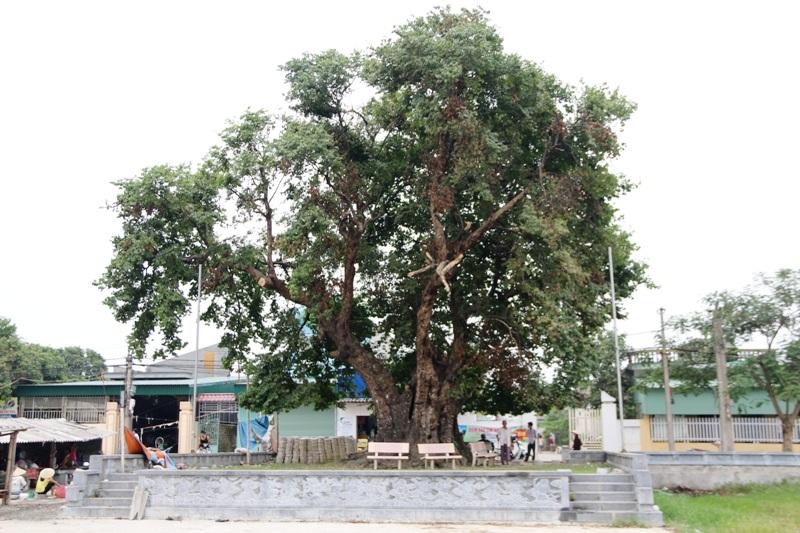 Trước ngôi đền đá độc đáo làng Xuân Vũ có cây thị hàng trăm năm tuổi. Không gian quanh đình vẫn còn lưu giữ nhiều nét cổ kính của làng quê Bắc Bộ cây đa giếng nước sân đình.