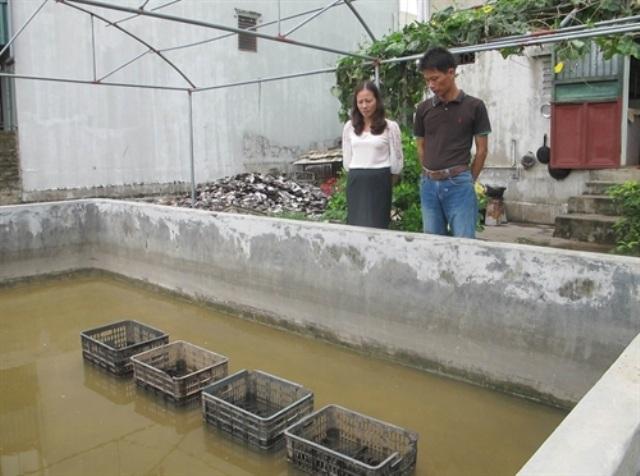 Mô hình nuôi trai nước ngọt lấy ngọc được thực hiện tại Ninh Bình từ năm 2013
