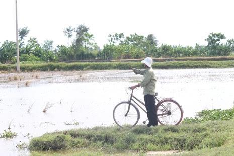 Thương binh Nguyễn Văn Đức xót xa nhìn đồng ruộng bỏ hoang