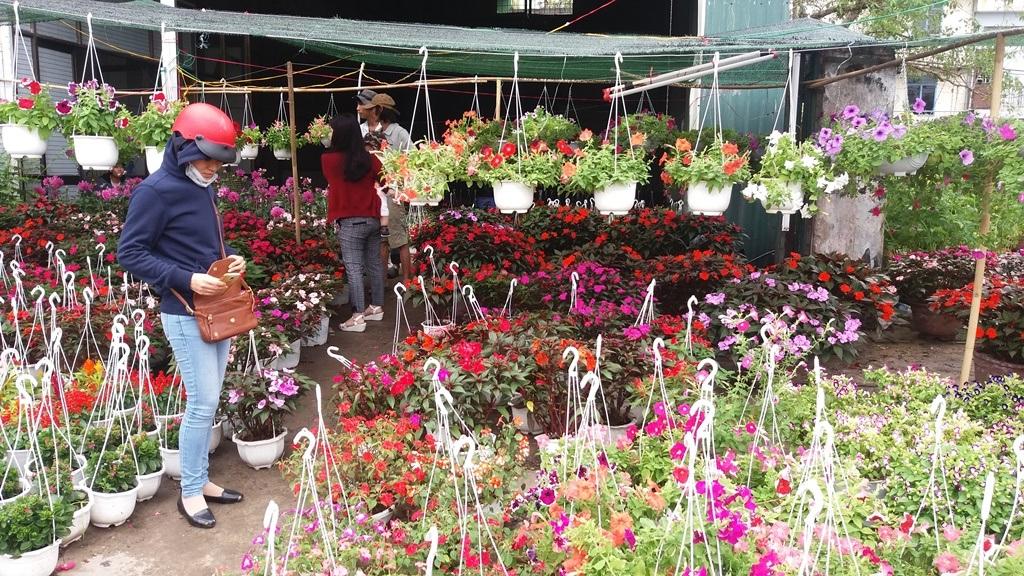 Chợ hoa hội tụ đủ các loại hoa của 3 miền