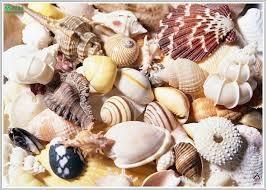 Có các yếu tố vi chất (microelement) khá cao: iốt cao gấp 200 lần trong trứng và thịt, hàm lượng sắt, kẽm, đồng, mangan, brôm, selen…đều cao. Kẽm (Zn) rất cần thiết cho sinh dục, buồng trứng, tinh trùng, hoóc môn insulin. Selen là chất chống oxy hóa mạnh.