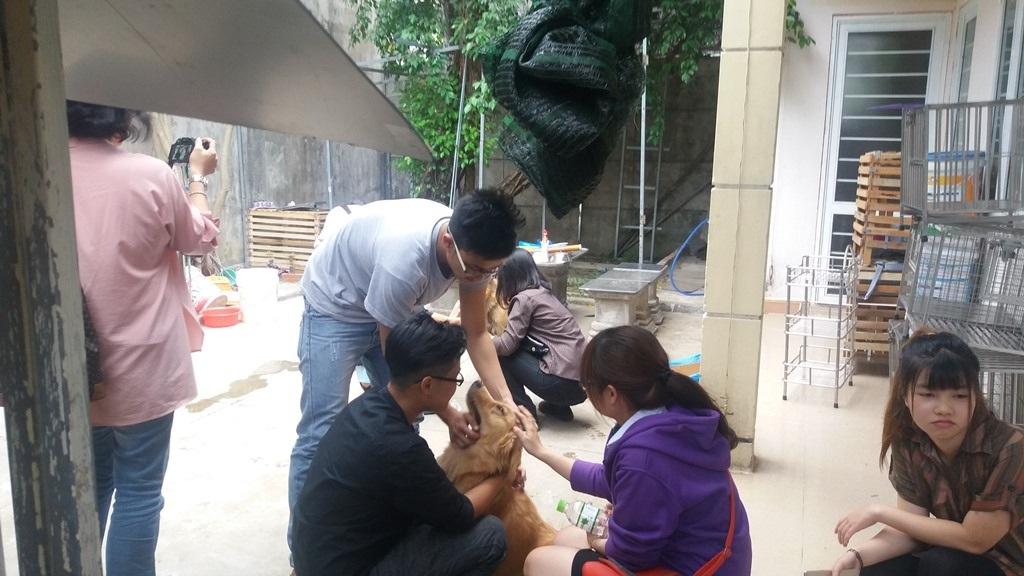 Những chú chó, mèo còn lại của trạm sẽ được Hội cứu trợ động vật Đà Nẵng hỗ trợ tìm chủ mới