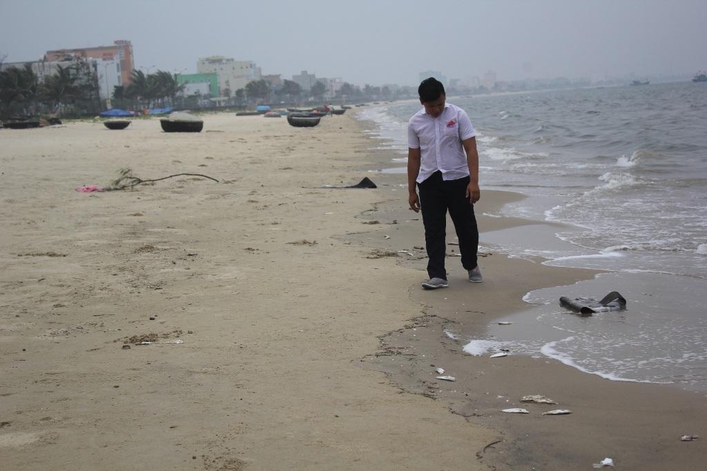 Cá chết nằm rải rác dọc bờ biển