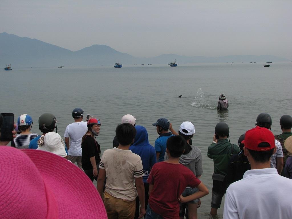 Vì con cá còn sống nên các ngư dân lại đưa cá trở về biển