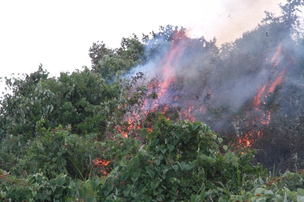 Lửa bùng cháy dữ dội tại rừng Nam Hải Vân