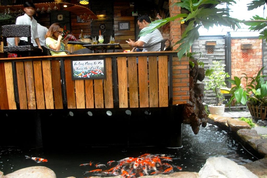 Người uống cafe và cá Koi gần gũi nhau