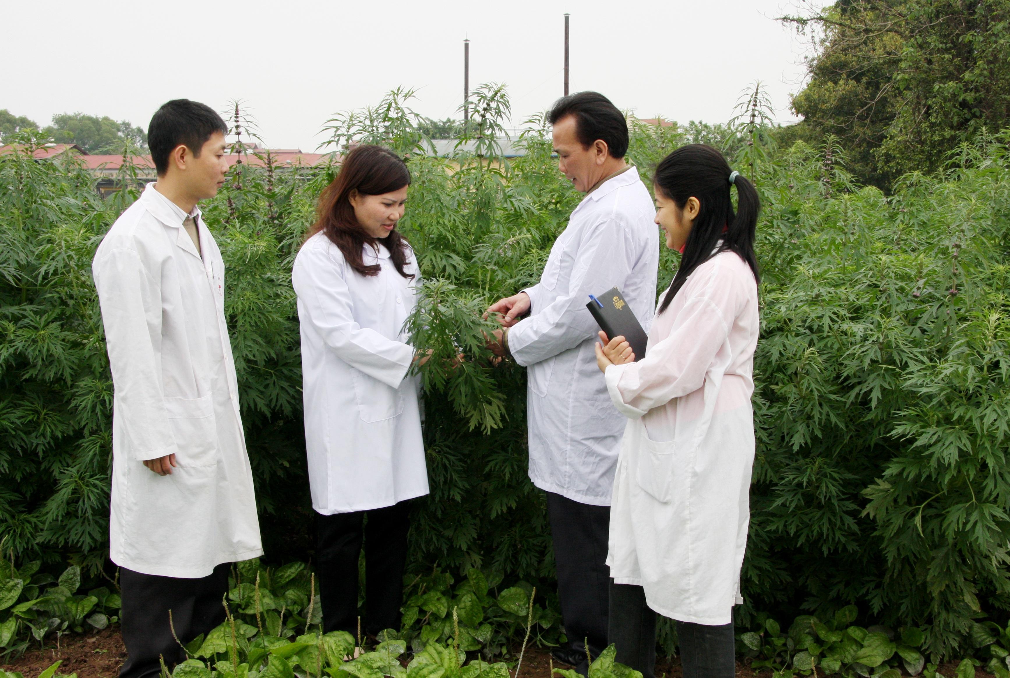 ược sĩ Lê Thị Bình trao đổi với Thạc sĩ Ngô Quốc Luật - Giám đốc Trung tâm Nghiên cứu trồng và chế biến cây thuốc - Viện Dược liệu.