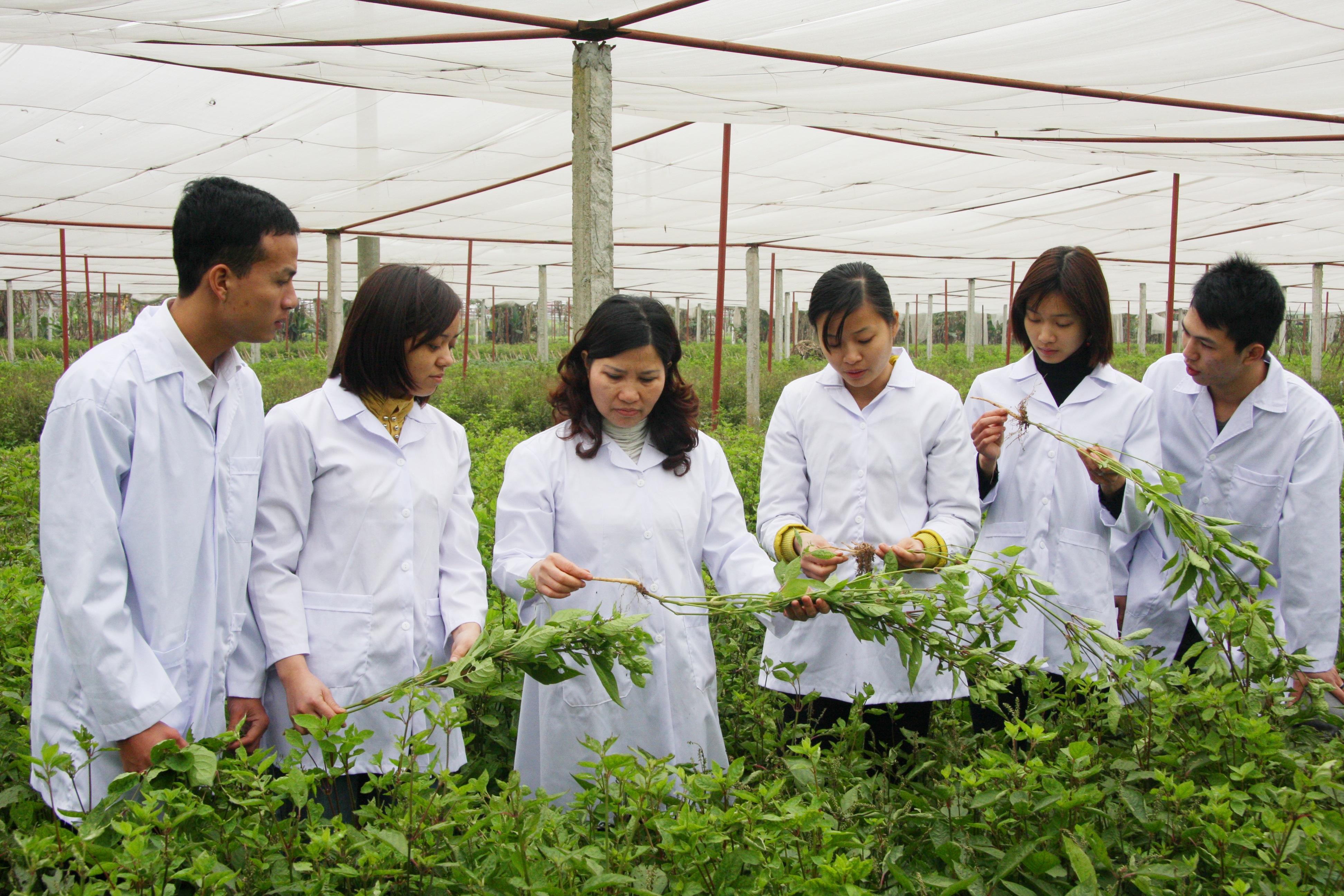 Đoàn cán bộ của Công ty Dược phẩm Tâm Bình thăm khu trồng dược liệu.