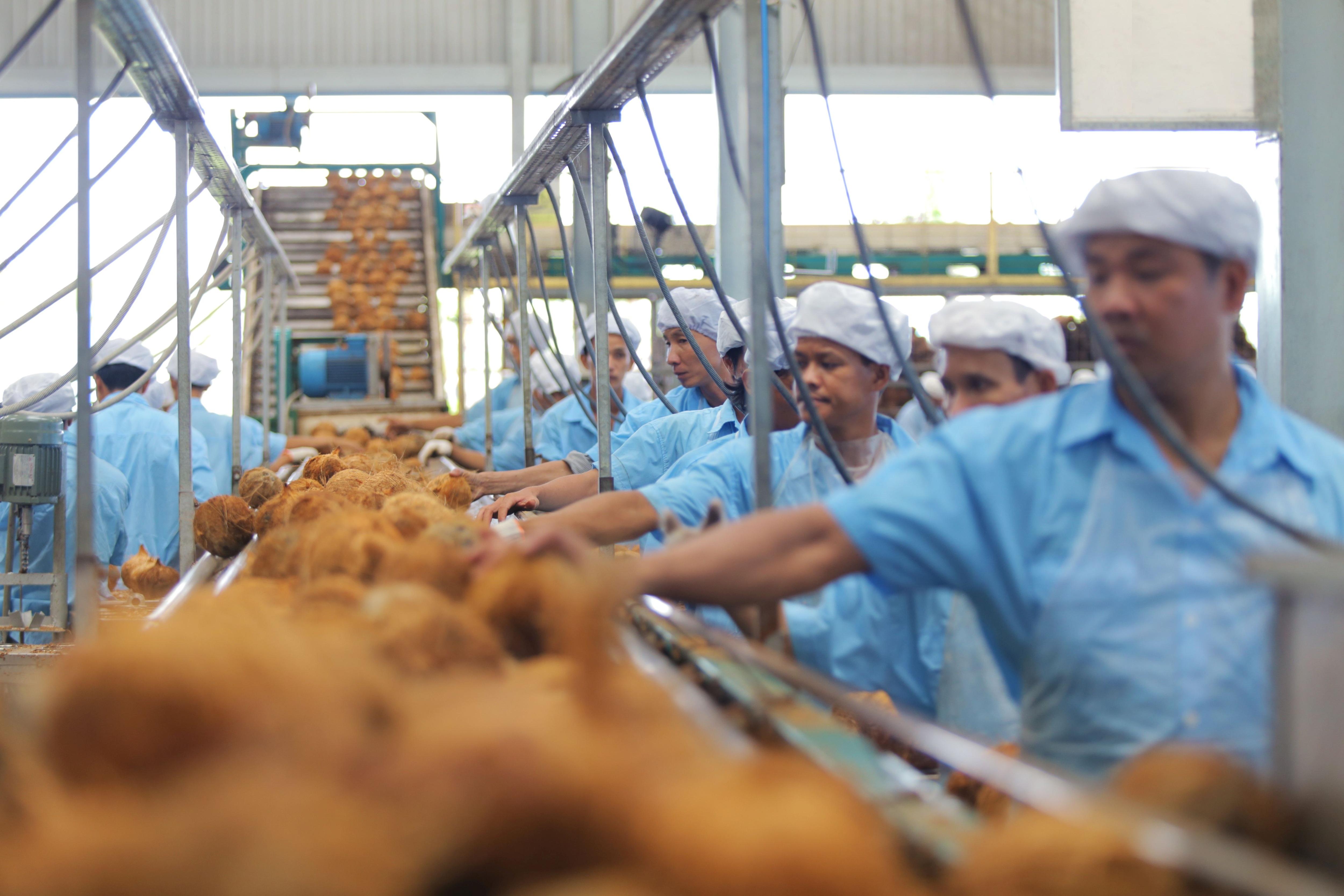 Nước dừa đóng hộp đầu tiên tại Việt Nam sử dụng dây chuyền công nghệ hàng đầu thế giới - 1
