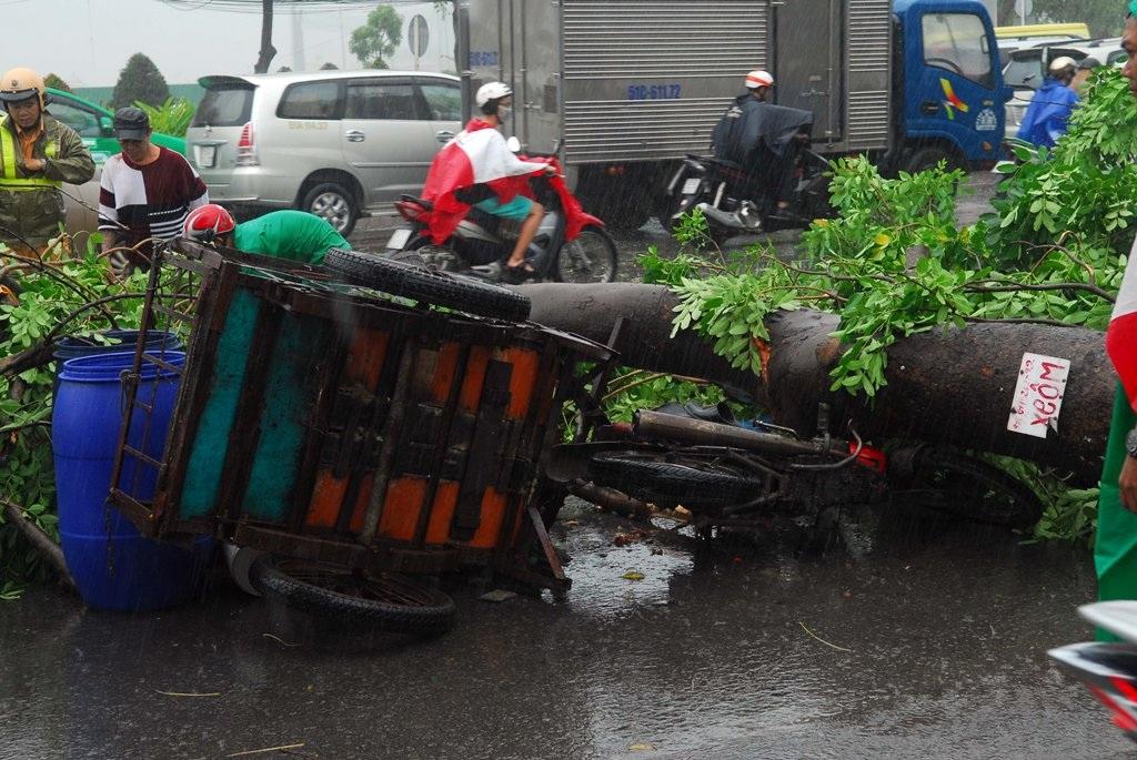 Cây xanh ngã đè lên xe ba gác của nạn nhân