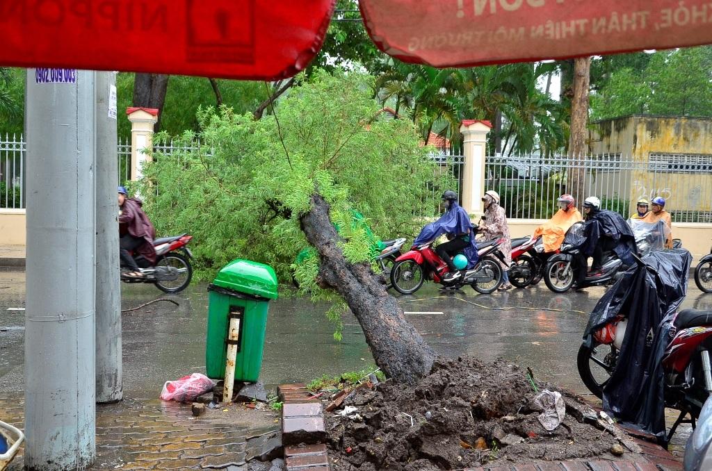 Cây me ngã chắn ngang giữa đường Nguyễn Thị Minh Khai