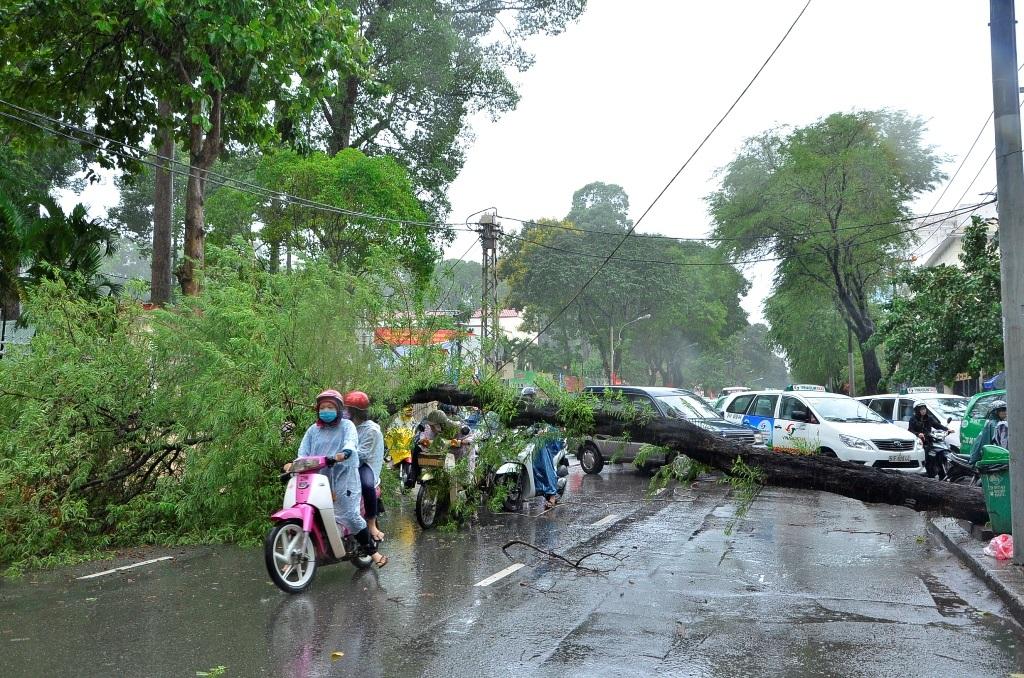 Bất chấp nguy hiểm, nhiều người vẫn cố chui qua thân cây ngã