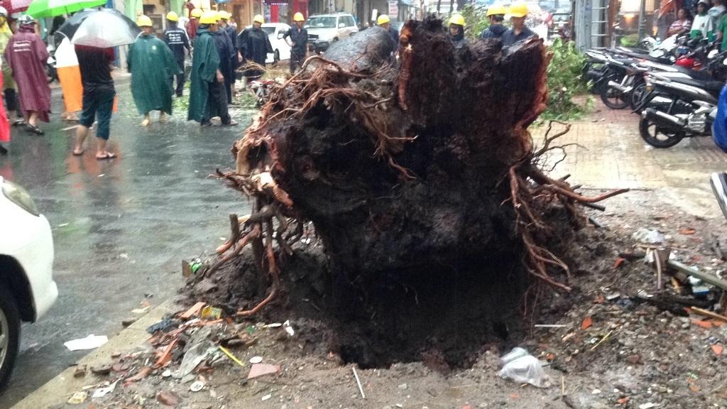 Rễ cây mục nát