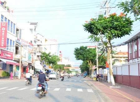 Đường Lê Lợi, phường 6, TP Sóc Trăng dài chưa đến 1km nhưng có đến hàng chục cây Sò đo cam được địa phương trồng làm cảnh.