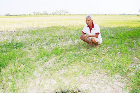 Ông Liêng Văn Phước trong tâm trạng héo hon vì ruộng lúa còi cọc của mình khi không đồng bị khô hạn.