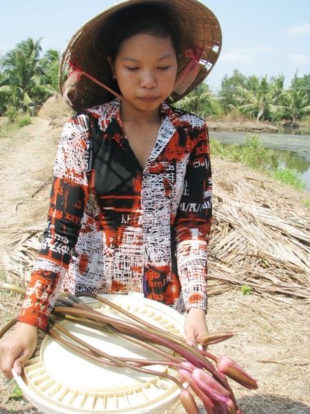 Nhiều năm nay, 4 cha con sống dựa vào ao bông súng. Mỗi ngày, Nữ hái bông súng đi bán kiếm tiền mua gạo ăn qua ngày.