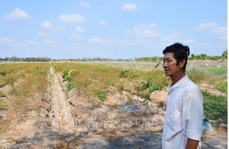 Một người dân xót xa trước ruộng ớt lèo tèo không sống nổi vì khô hạn.