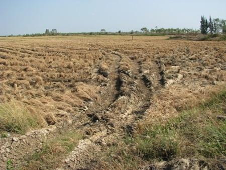 Nhiều diện tích đất nông nghiệp ở tỉnh Bạc Liêu bị hạn hán và xâm nhập mặn.