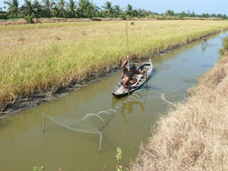 Hạn, mặn khắc nghiệt đã gây ảnh hưởng không nhỏ đến việc sản xuất lúa, tôm của người dân Cà Mau.