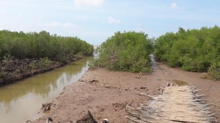 Đường ra bãi nghêu nuôi ở xã Vĩnh Thịnh vắng bóng người đi thu hoạch do nghêu bất ngờ chết hàng loạt, gây thiệt hại trên 20 tỷ đồng (Ảnh: CTV)