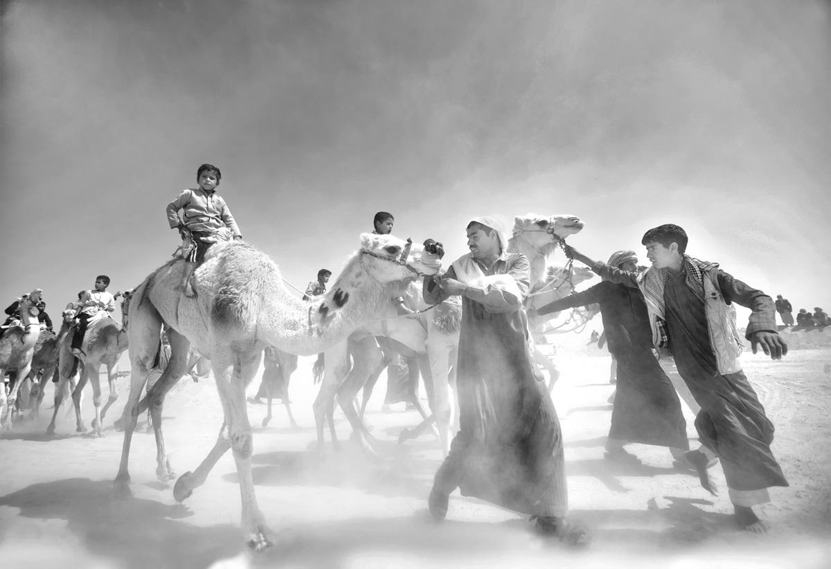 Tác phẩm đạt giải khuyến khích. Dắt lạc đà đến bán tại một ngôi chợ ở Ai Cập. Tác giả: Mohamed Kamal