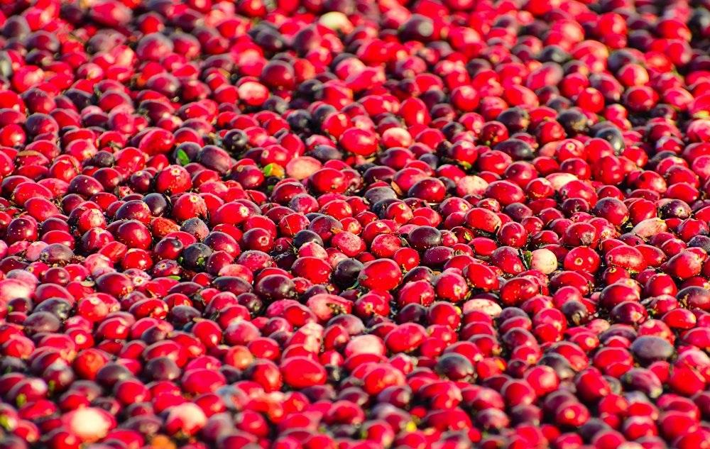 Việt quất chín đỏ ối nổi trên bề mặt nước