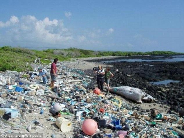 ...phải hứng chịu những đợt rác khổng lồ từ Thái Bình Dương dạt tới