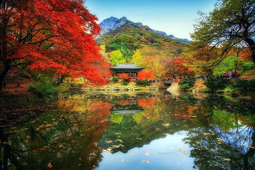 Dòng người nô nức tới ngắm mùa lá đỏ