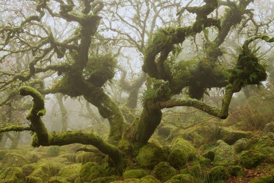 Rừng cây thuộc Vườn Quốc gia Dartmoor, Devon, Anh