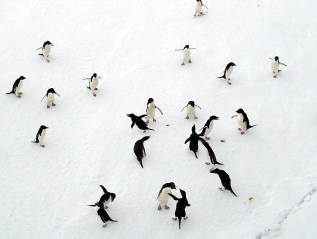 Tới thăm lãnh địa của loài chim cánh cụt Hoàng Đế