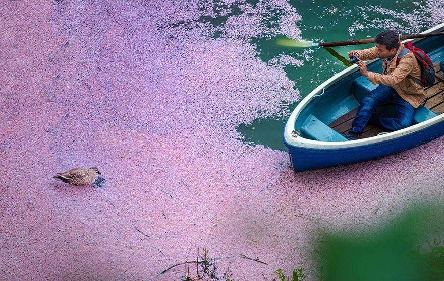 Dòng sông hoa