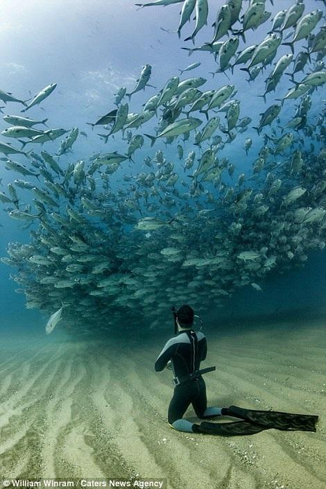 """Các thợ lặn phải nín thở và quỳ xuống cát để """"cơn lốc"""" khổng lồ vượt qua họ."""