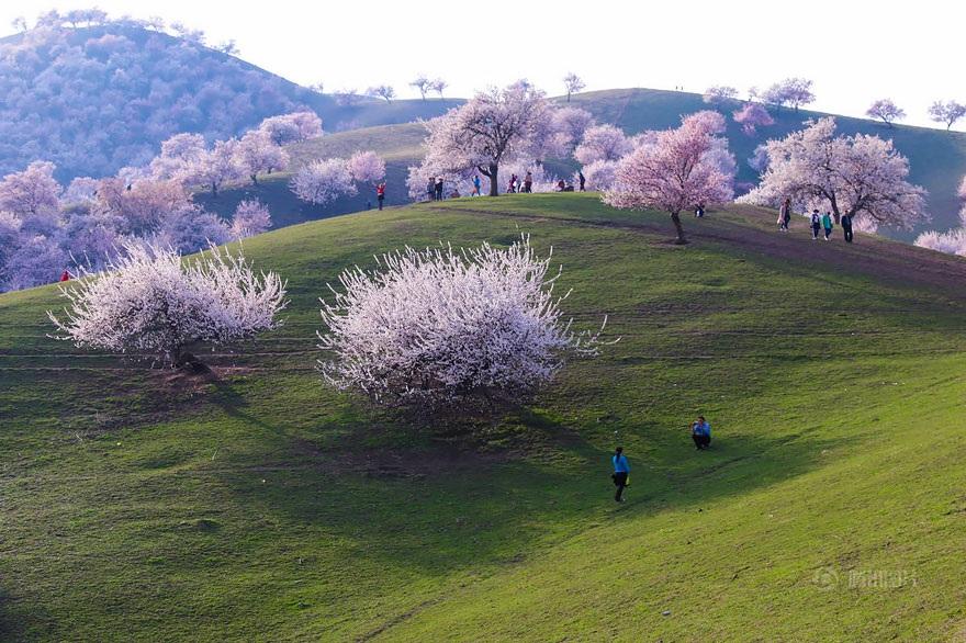 Thảm hoa bung nở đẹp như mơ nơi thung lũng xa xôi - 8