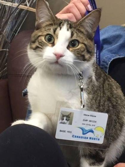 Meow Meow có tên trong đội ngũ nhân viên trên chuyến bay