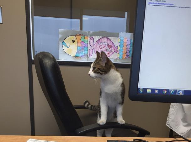 Mèo trở thành tiếp viên phi hành đoàn - 3