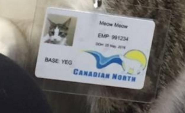 Thẻ tên riêng dành cho Meow Meow