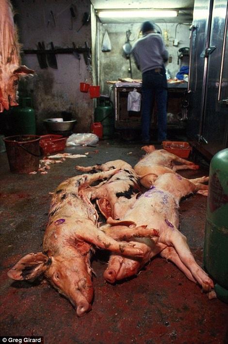 Hình ảnh giết mổ gia súc và chế biến thực phẩm chui diễn ra ngay tại khu ổ chuột