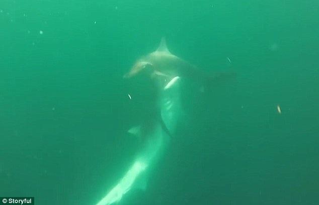 Đi săn cá ngừ nhưng rồi ngư dân người Mỹ lại quay được thước phim rất bất ngờ dưới đại dương