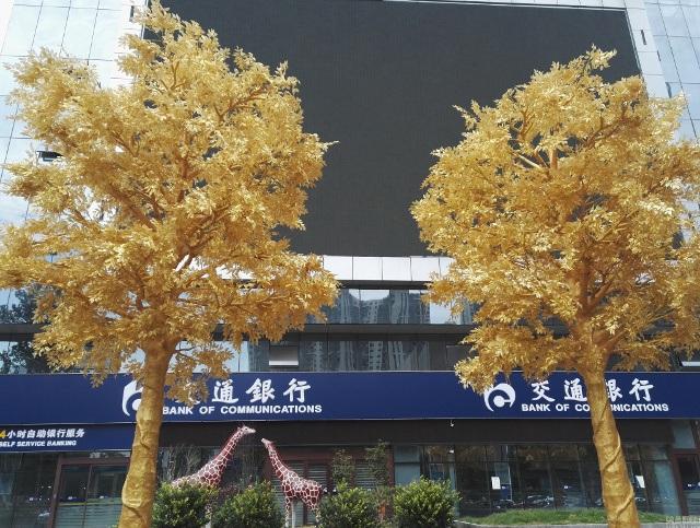 Cây vàng trước cửa một ngân hàng ở Trịnh Châu