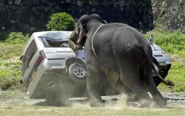Kỹ năng sống sót khi bất ngờ bị động vật hoang dã tấn công - 3