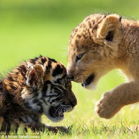 Chơi đùa bên nhau như hai người bạn thân thiết.